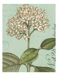 Botanique Bleu IV Premium Giclee Print by Hugo Wild
