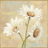 Beautiful Daisies II Giclee Print by Daphne Brissonnet