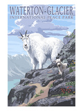 Waterton-Glacier International Peace Park - Mountain Goat and Baby Prints by  Lantern Press