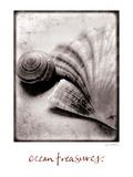 Ocean Treasures Premium Giclee Print by Sue Schlabach