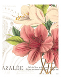 Azalee Jardin I Giclee Print by Wild Apple Portfolio
