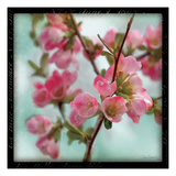 Quince Blossoms II Premium Giclee Print by Sue Schlabach