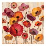 Sunrise Anemones Premium Giclee Print by Silvia Vassileva
