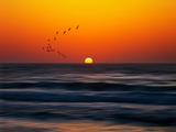 Birds at Sunset Photographic Print by Josh Adamski