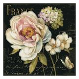 Marche de Fleurs on Black Premium Giclee Print by Lisa Audit