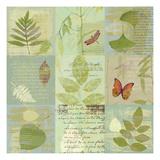 Botaniques de L'Italie Print by Hugo Wild
