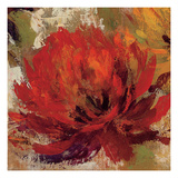 Fiery Dahlias II Giclee Print by Silvia Vassileva