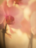 Study of an Orchid IV Photographic Print by Mia Friedrich