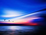 Blue Geese Photographic Print by Josh Adamski