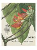Botanique Tropicale I Giclee-tryk i høj kvalitet af Hugo Wild