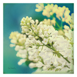 Natures Lilac Blossom Premium Giclee Print by Sue Schlabach