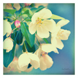 Natures Apple Blossom Premium Giclee Print by Sue Schlabach