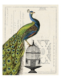 Peacock Birdcage I Giclee Print by Sue Schlabach
