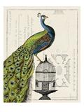 Riikinkukko ja lintuhäkki Premium-giclée-vedos tekijänä Sue Schlabach