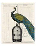 Peacock Birdcage II Giclee Print by Sue Schlabach