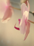 Study of an Orchid VII Photographic Print by Mia Friedrich