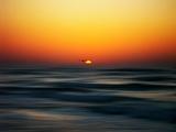 Bird at Sunset Photographic Print by Josh Adamski