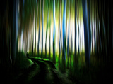 Transfer Photographic Print by Josh Adamski