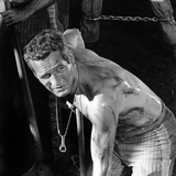 Cool Hand Luke, Paul Newman , 1967 Photo