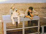 Born Free, Virginia McKenna, Elsa The Lioness, Bill Travers, 1966 Photo