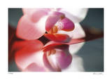 Floral Elements 10 Giclee Print by Florence Delva
