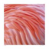 Pink Perfection 3 Limitierte Auflage von Joy Doherty