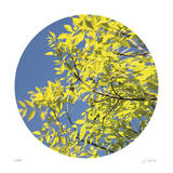Looking Up Circle Giclee Print by Joy Doherty