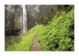 Trail To Comet Falls Giclee Print by Donald Paulson