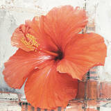 Hibiscus I Prints by Enrico Sestillo