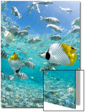 Tropical Fish in Bora-Bora Lagoon Prints by Michele Westmorland