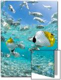 Tropical Fish in Bora-Bora Lagoon Prints by Michele Westmorland