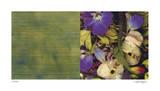 Exposure 107 Giclee Print by Teresa Camozzi