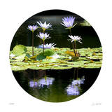 Serenity Reflection 2 Giclee Print by Joy Doherty