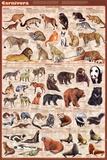 Carnivora (13 families of meat-eaters) Educational Poster Láminas