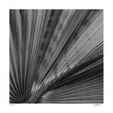 Palm Pleats Giclee Print by Edward Asher