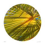 Oasis Shade Circle 2 Giclee Print by Joy Doherty