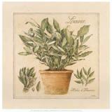 Herbes de Provence I Affiches par Laurence David