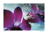 Floral Elements 11 Giclee Print by Florence Delva