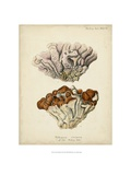 Coral Collection II Prints by Johann Esper