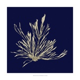 Seaweed on Navy III Print by  Vision Studio
