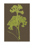 Ferns on Linen II Prints by  Vision Studio