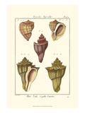 Pyrule Shells, Pl. 434 Posters par Denis Diderot