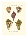 Pyrule Shells, Pl. 434 Posters by Denis Diderot