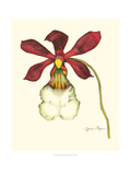 Majestic Orchid II Giclee Print by Jennifer Goldberger