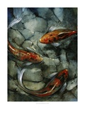 Tres Koi II Prints by Tim O'toole