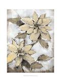Poinsettia Study I Prints by Tim O'toole