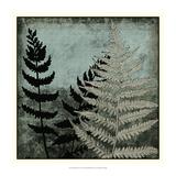 Illuminated Ferns V Posters af Megan Meagher