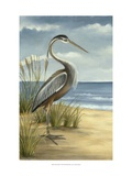 Shore Bird I Prints by Ethan Harper