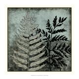 Illuminated Ferns VI Prints by Megan Meagher