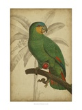 Parrot and Palm I Poster von  Vision Studio